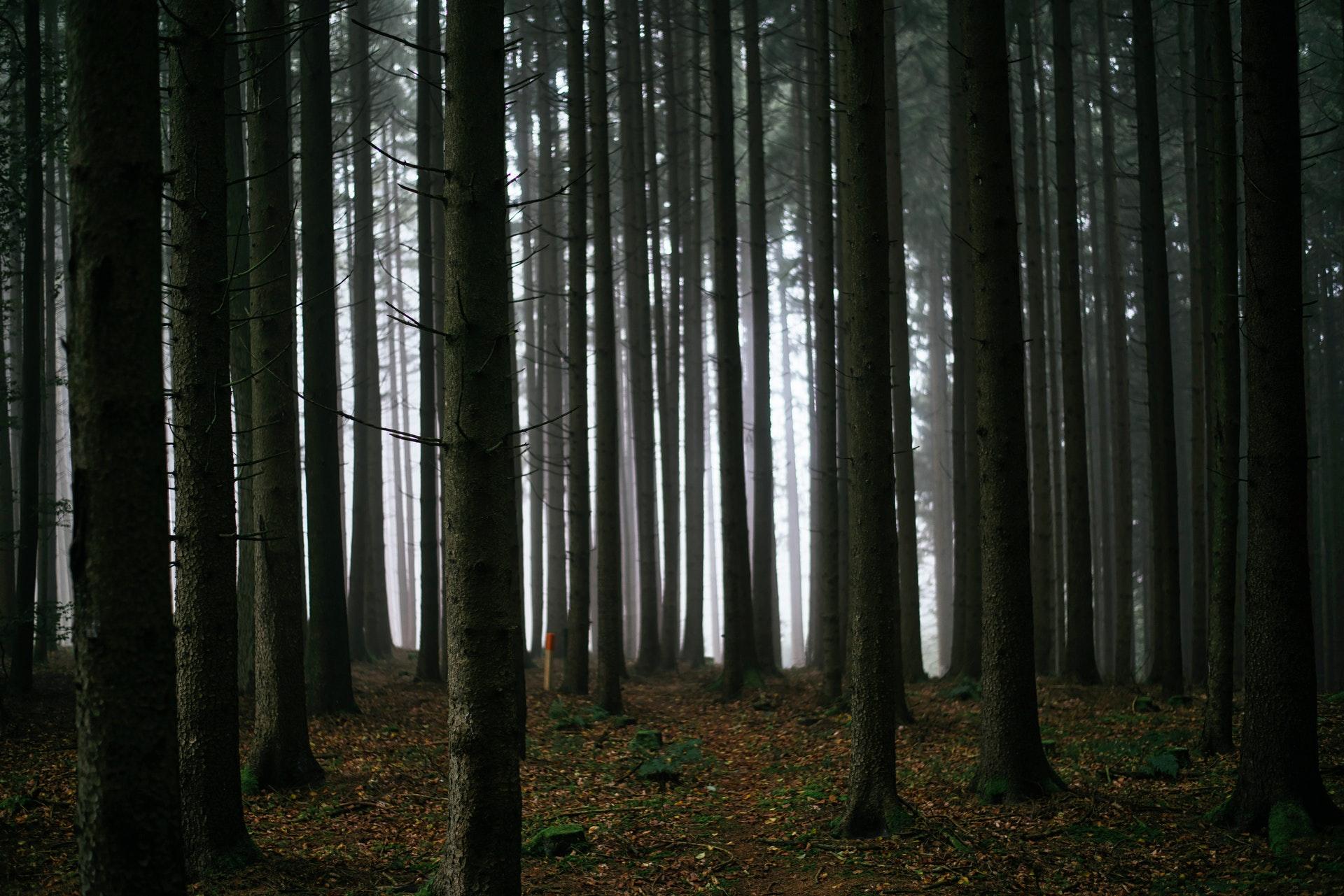 dark-forest-trees-6891.jpg